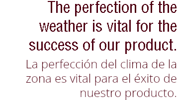 Hh coffee group the perfection of the weather is vital for the success of our product la perfeccin fandeluxe Choice Image